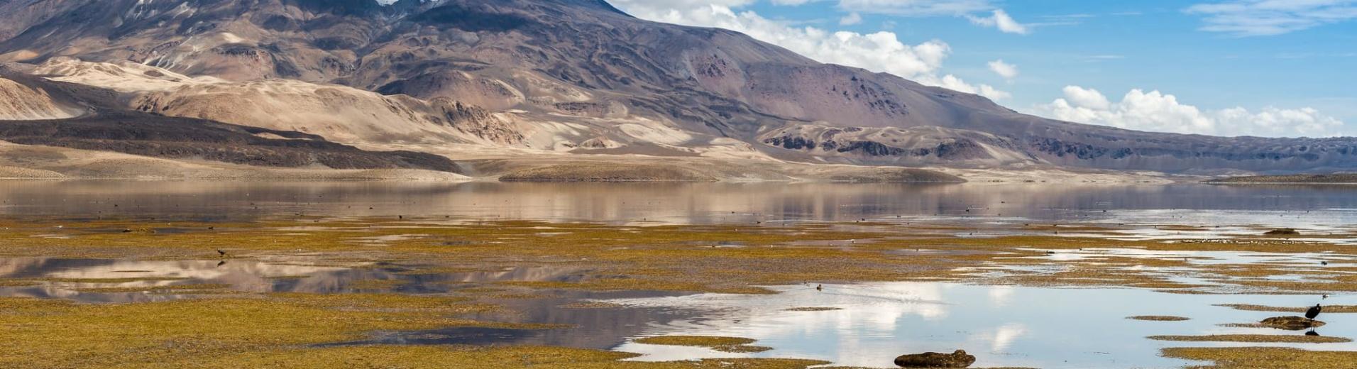 Parc national de Lauca, Chili. Volcan enneigé dans l'Altiplano chilien