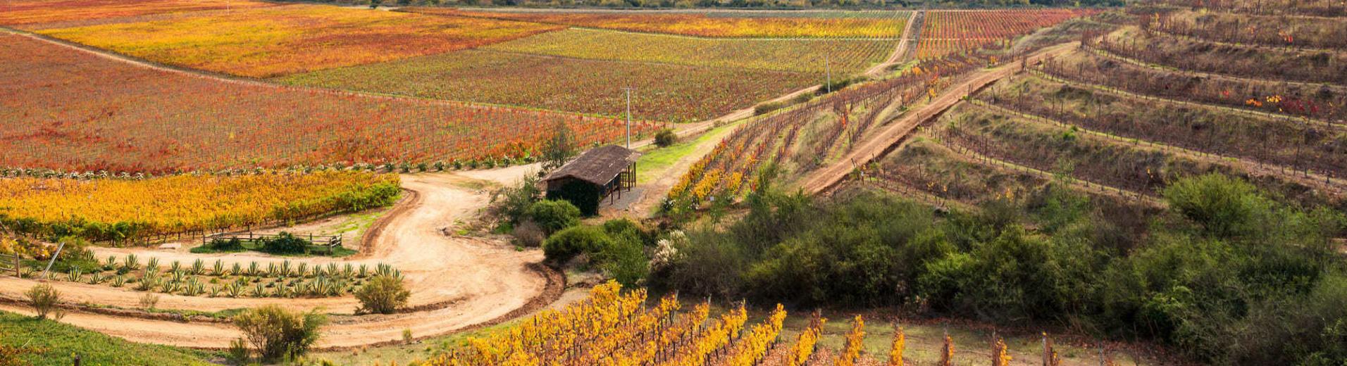 Vignobles au Chili, vallée de Colchagua