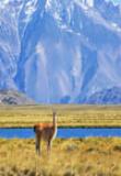 Perito Moreno, Parc National, Argentine, Patagonie