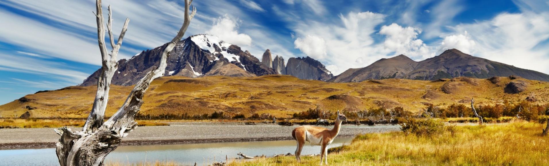 Guanaco au parc Torres del Paine